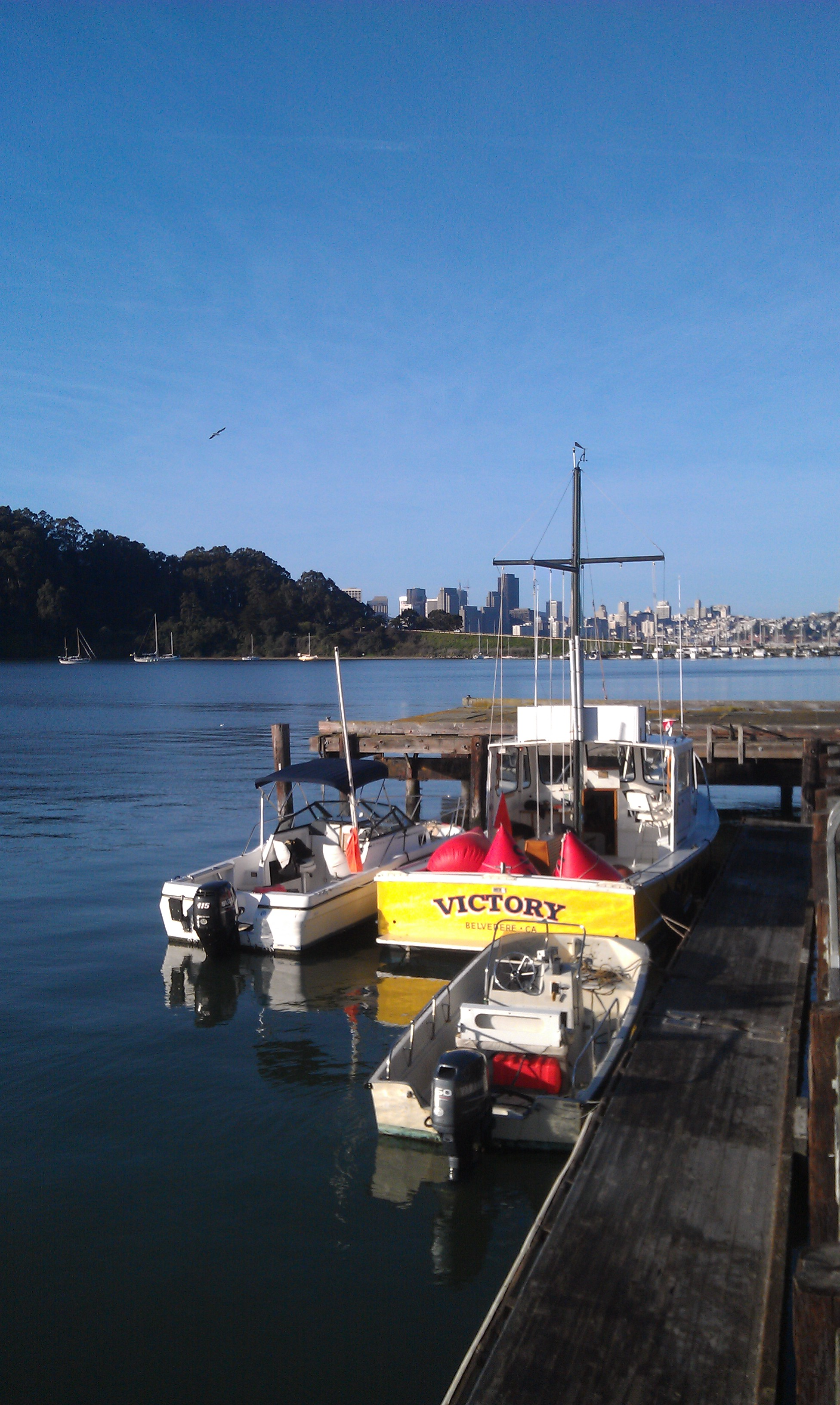 """SFYC """"Victory"""" on Clipper Cove"""