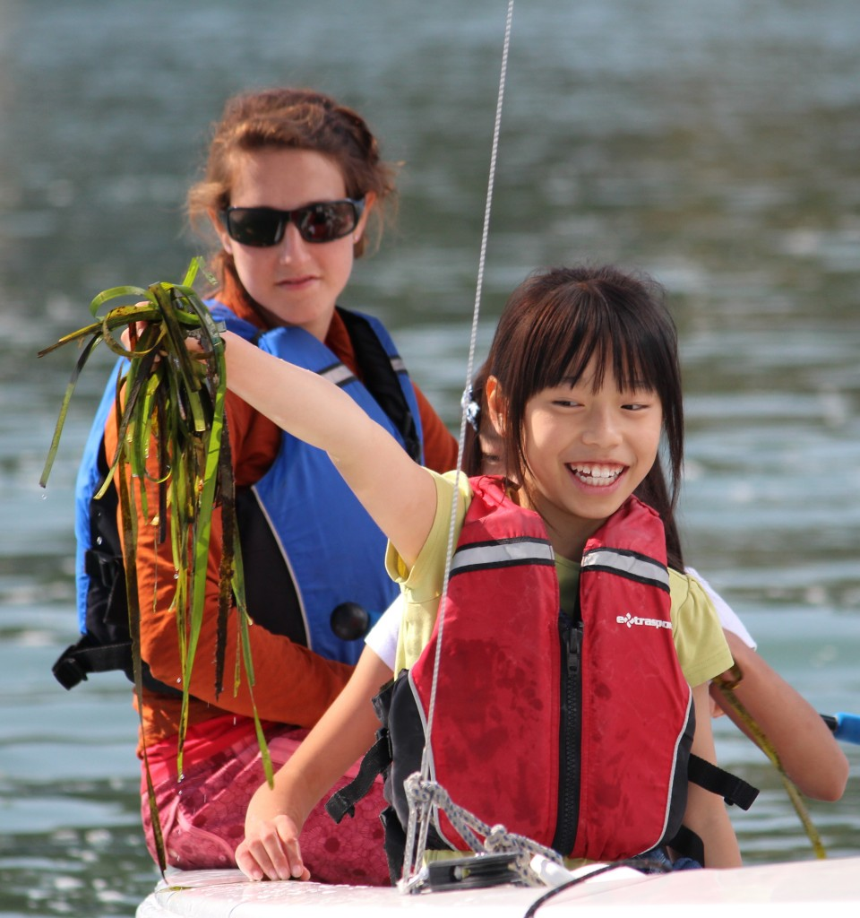 JYC Seaweed Discovery