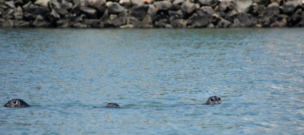 Seals-cr